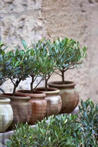 Olivier, huile, plante, méditerranée, sud, arbre, jardin, pot ...