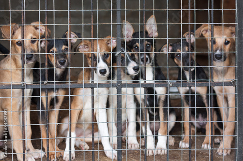 Fotografie, Obraz  Many puppies locked in the cage