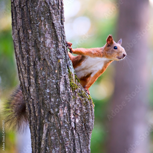 Deurstickers Eekhoorn Squirrel