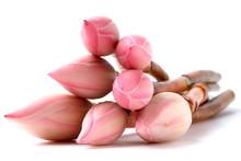 Pink Lotus Buds