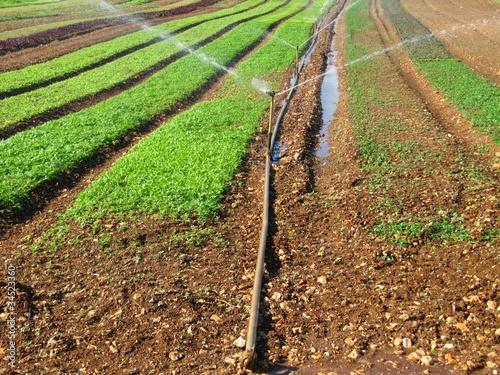 Agricultural irrigation system. Wallpaper Mural