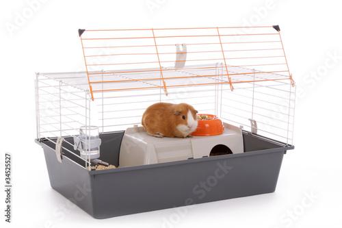 Fotografie, Obraz  cage pour cobaye ouverte