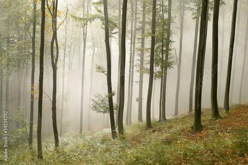 Papiers peints Foret brouillard Misty autumn beech forest