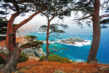 Obraz na Szkle Drzewa cedar