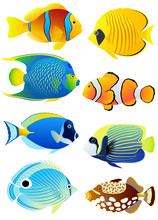Set Of Tropical Fish
