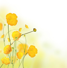 Beautiful Buttercup Flowers Background With Free Space For Text