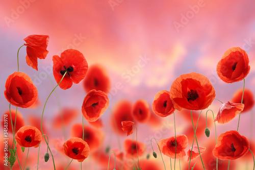 In de dag Poppy Poppy field with evening sky background
