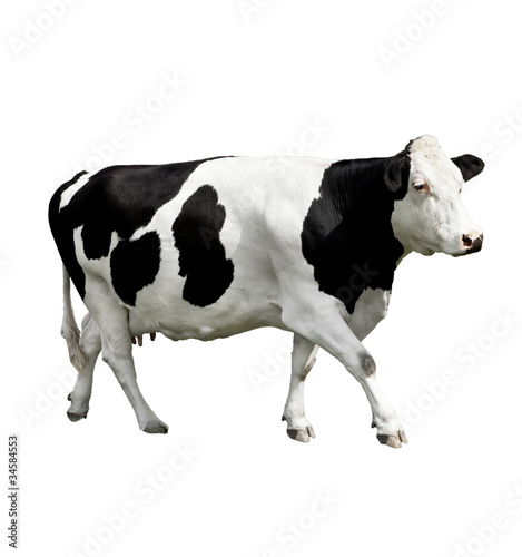 Photo Stands Cow cow in front of a white background