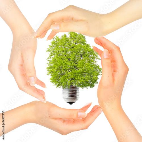 Fototapeta Hands around the green light bulb obraz na płótnie