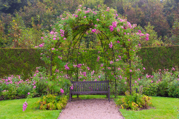 FototapetaSingle bench in the park under pink roses