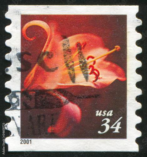 Fotografia  stamp flower