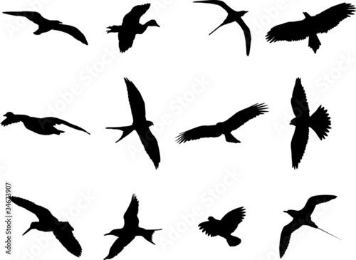 Fotomural  Birds silhouette collection - vector