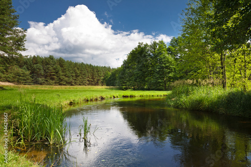 Summer view of the river in forest - 34624667