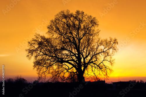gold-sunste-z-sylwetki-drzewa