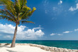 Idyllic scenery of Caribbean sea with lonely palm tree