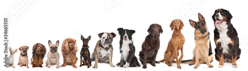 Fotobehang Hond twelve dogs in a row