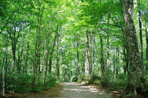 Papiers peints Route dans la forêt 森林の道