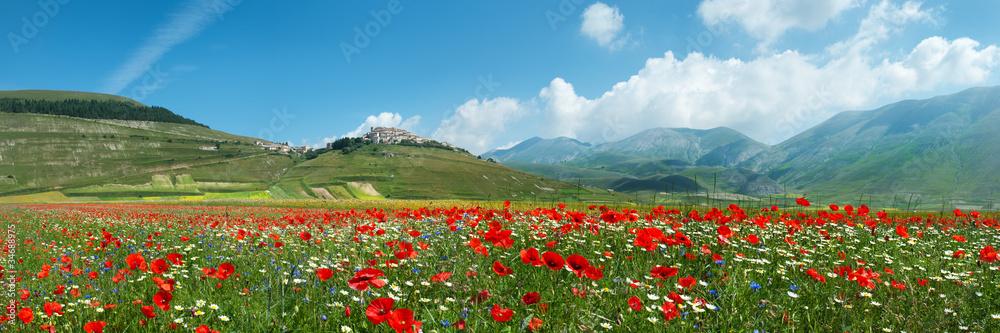 Fototapety, obrazy: Panoramica Fioritura Castelluccio
