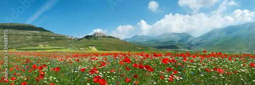Fotobehang Blauw Panoramica Fioritura Castelluccio
