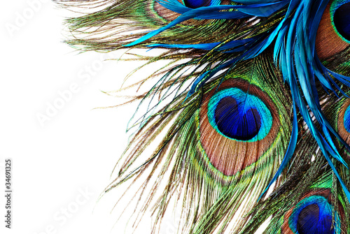 Photo sur Aluminium Paon Peacock Feather