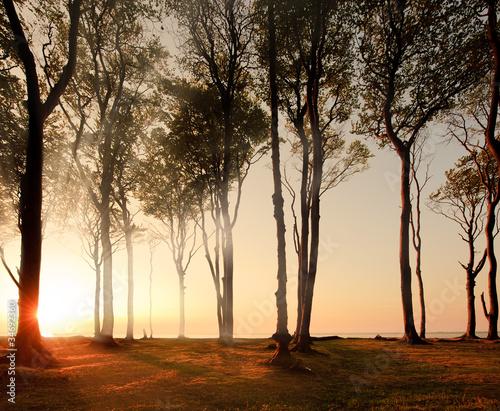 widok-drzew-przed-wschodem-slonca-sloneczny-poranek