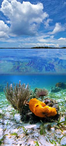 Podzielony widok na Morze Karaibskie z zachmurzonym niebieskim niebem i pod wodą, gąbkę z koralem morskim i robaka z miotełki, Panama