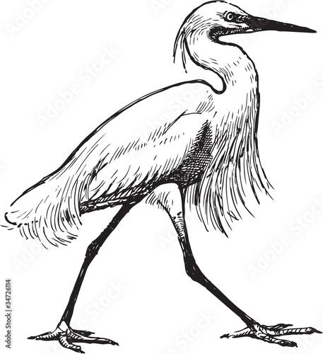 Fototapeta Walking heron
