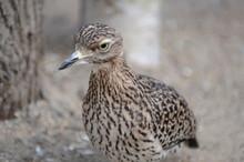Afrikanischer Vogel