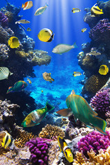 Plakat Coral colony and coral fish