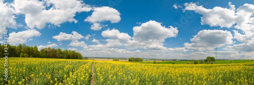Canvas Prints Culture Yellow flower field panorama