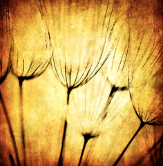 Panel Szklany Grunge abstract dandelion flower background