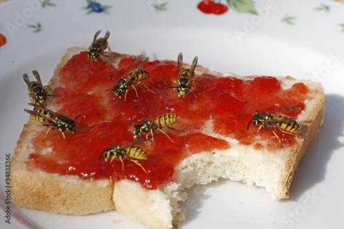 Fotografie, Obraz  Wespen auf Toast