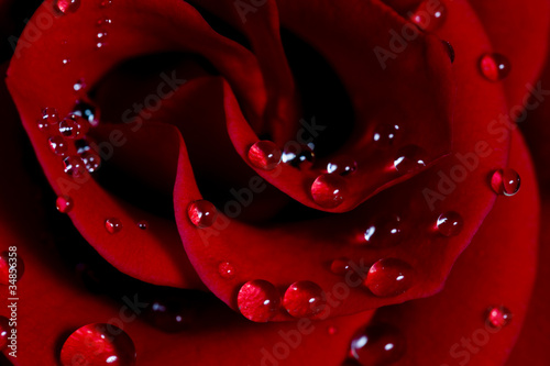 Naklejki o różnych zastosowaniach roza-z-kroplami-wody