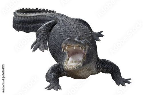 Aggressive Crocodile