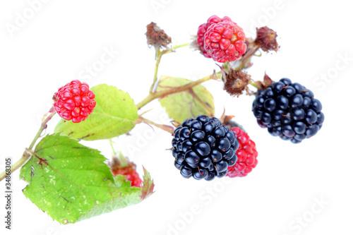 Fototapeta blackberries