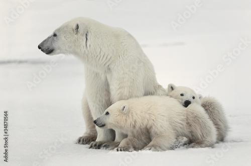 Recess Fitting Polar bear Polar she-bear with cubs.