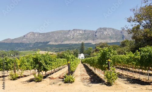 Foto op Aluminium Zuid Afrika Panorama of Cape Dutch homestead on a wine farm