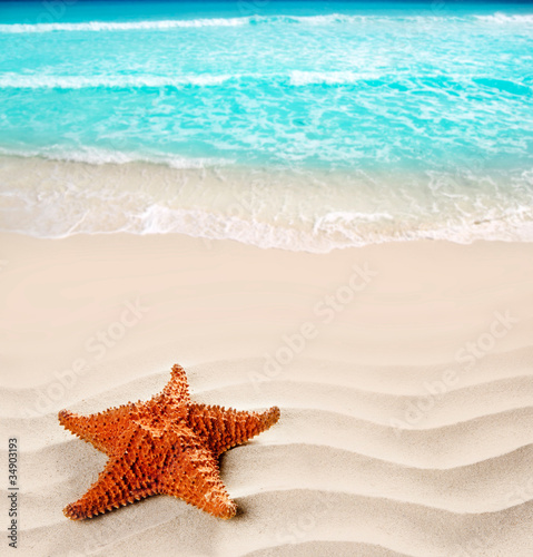 Photo Stands Turquoise caribbean beach starfish wavy white sand summer