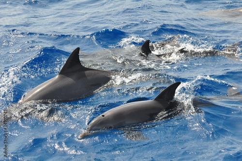Staande foto Dolfijn Delphine