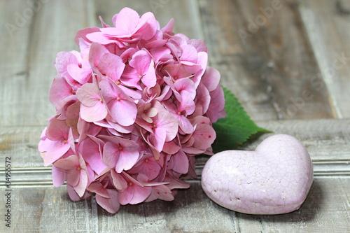 In de dag Hydrangea Hortensien