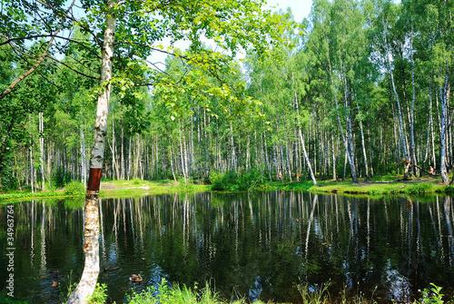 Foto op Plexiglas Berkbosje Rest on the lake