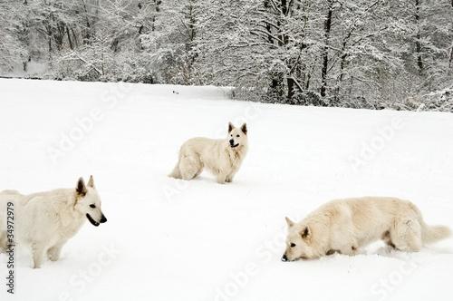 Valokuvatapetti Wolfpack