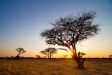 Fototapeta Sawanna - african sunset