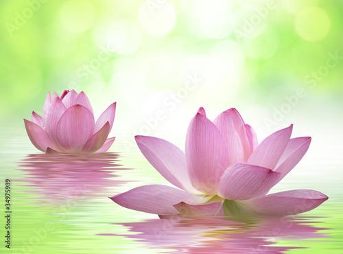 Foto op Canvas Lotusbloem 蓮の花