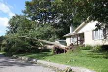 Private House, Fallen Tree Aft...