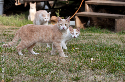 Photo  wild hungry cats