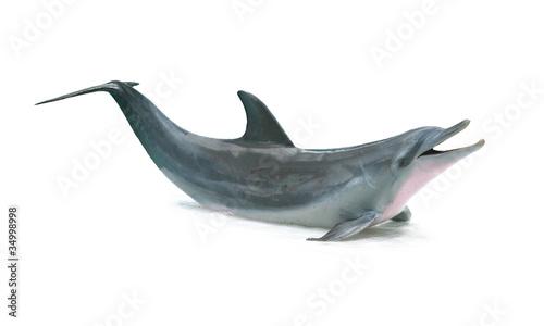 Foto op Aluminium Dolfijn Dolphin isolated on white background