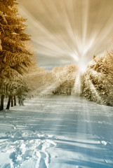 Fototapetaamazing sun beam in the forest with snow