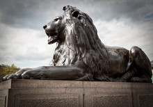 Bronze Sculpture Of A Lion In Trafalgar Square, London