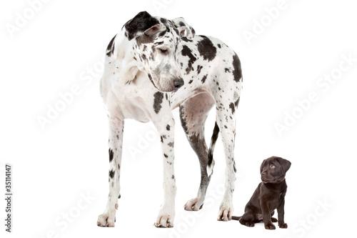 Photo  Big Dog Small Dog